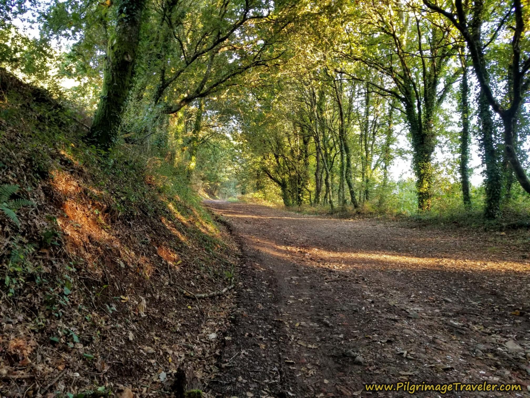 Final Forest Walk