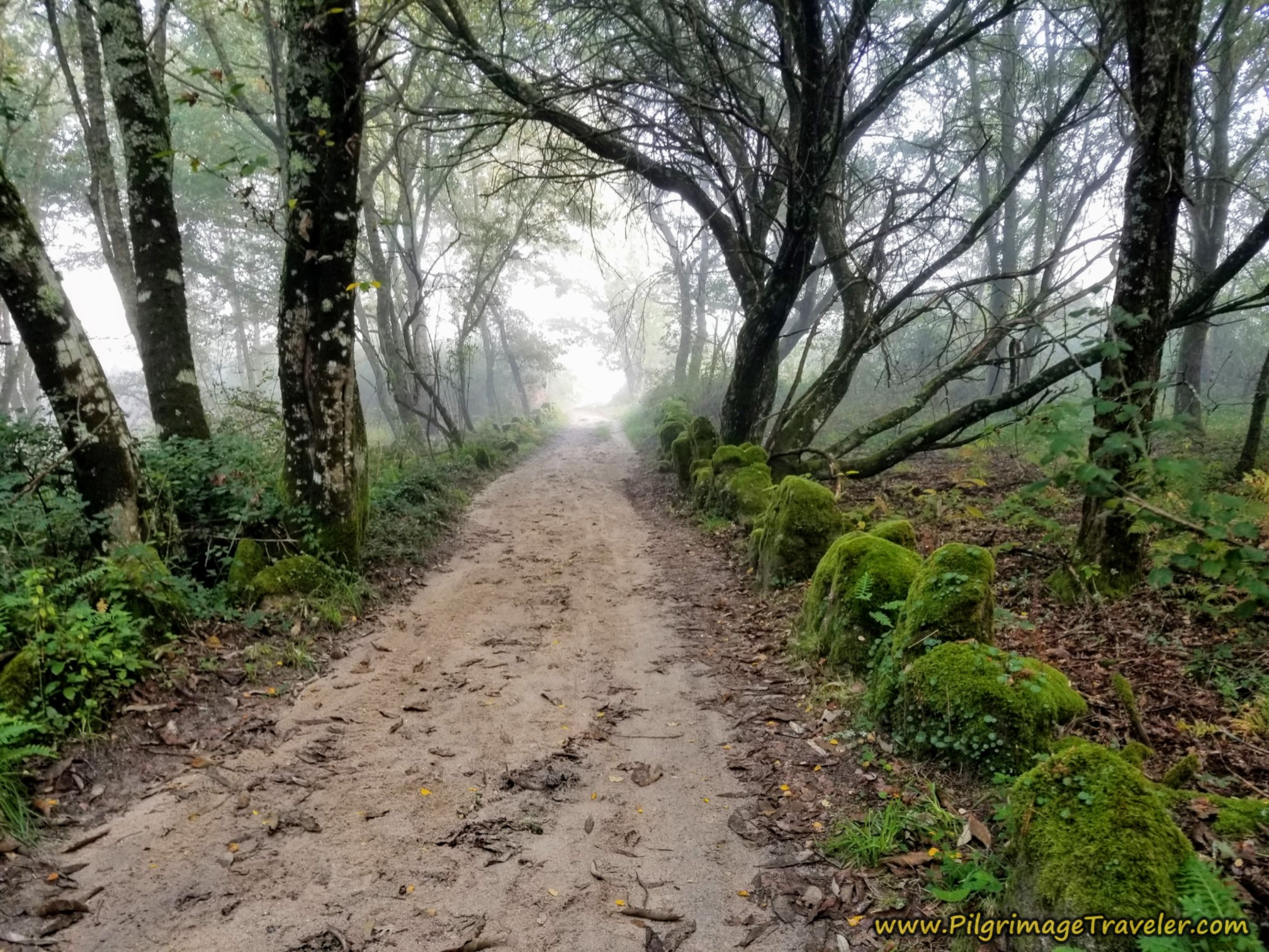 The Misty Mossy Woods, Camino Sanabrés, Ourense to Cea