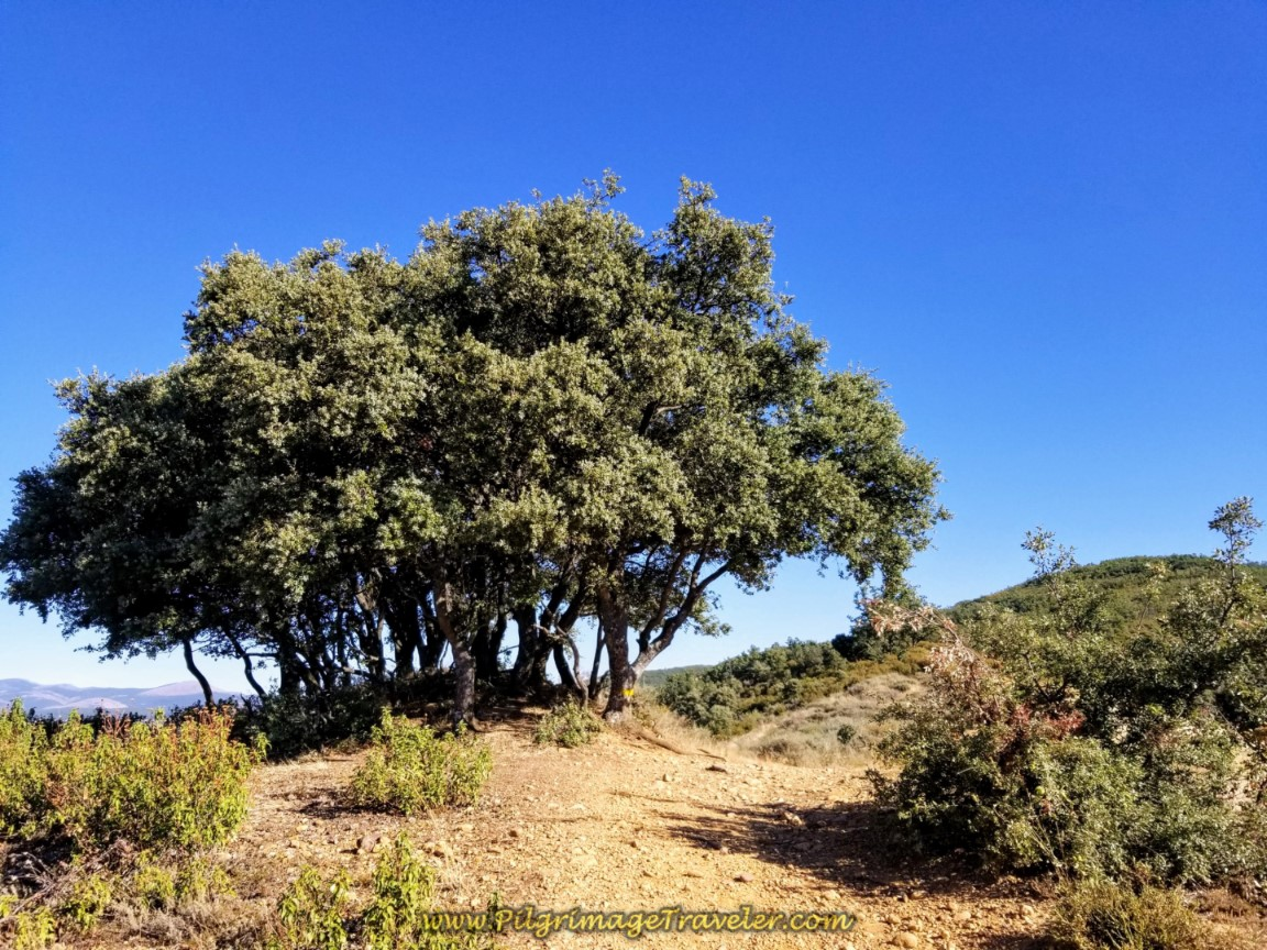 Tree Shelter at Top