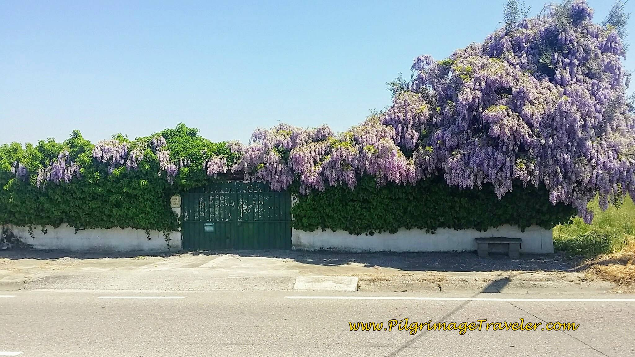 Wisteria Along the N110