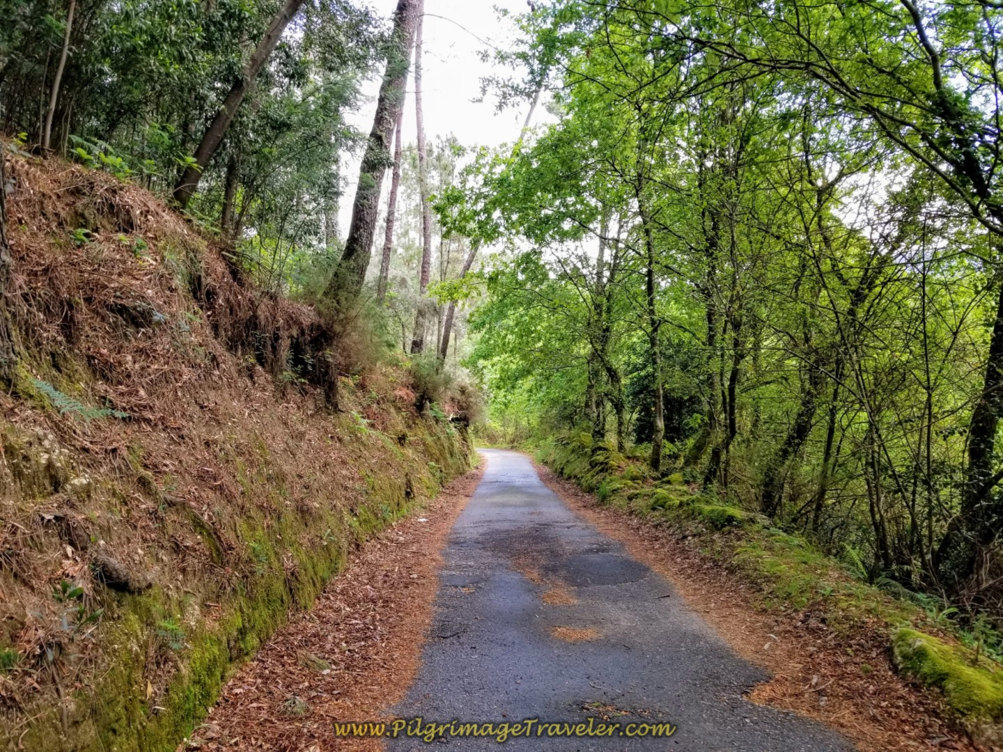 Quiet and Paved Rural Road is Next on day eighteen on the Central Route of the Portuguese Camino