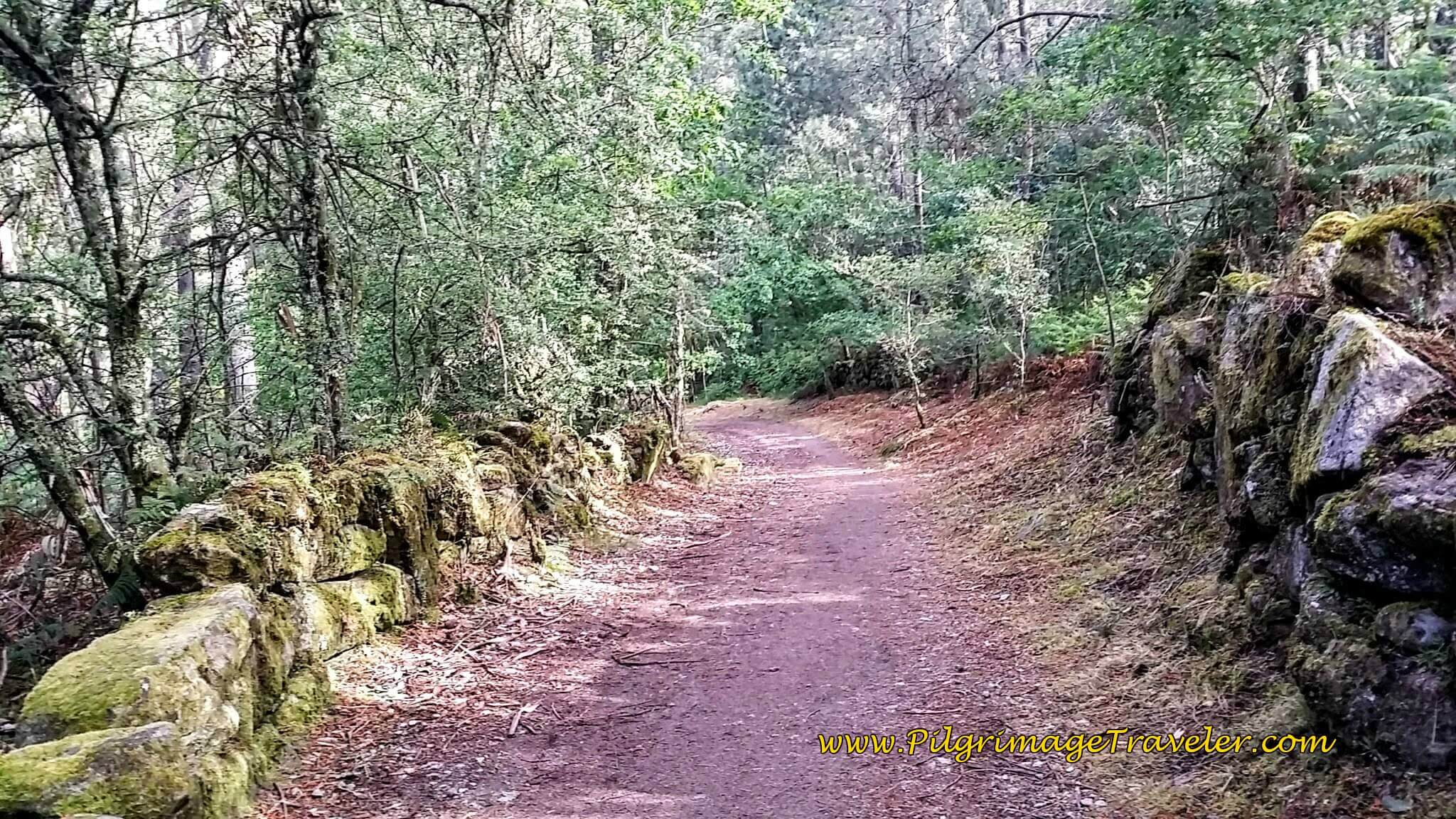 More Lovely Forest Roads, day twenty-two on the Camino Portugués