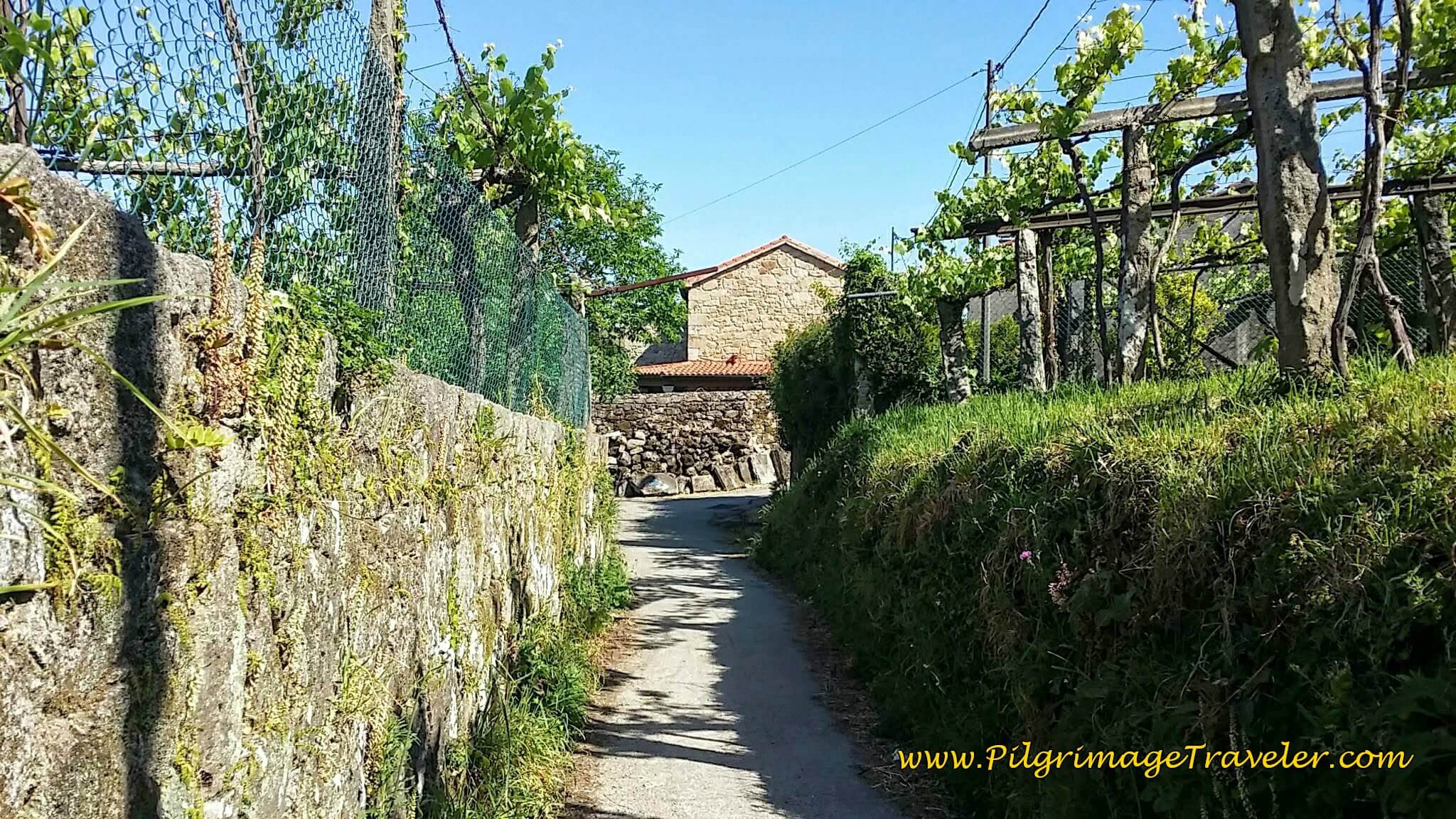 Walking Into O Vilar on Day Twenty-Four, Portuguese Camino