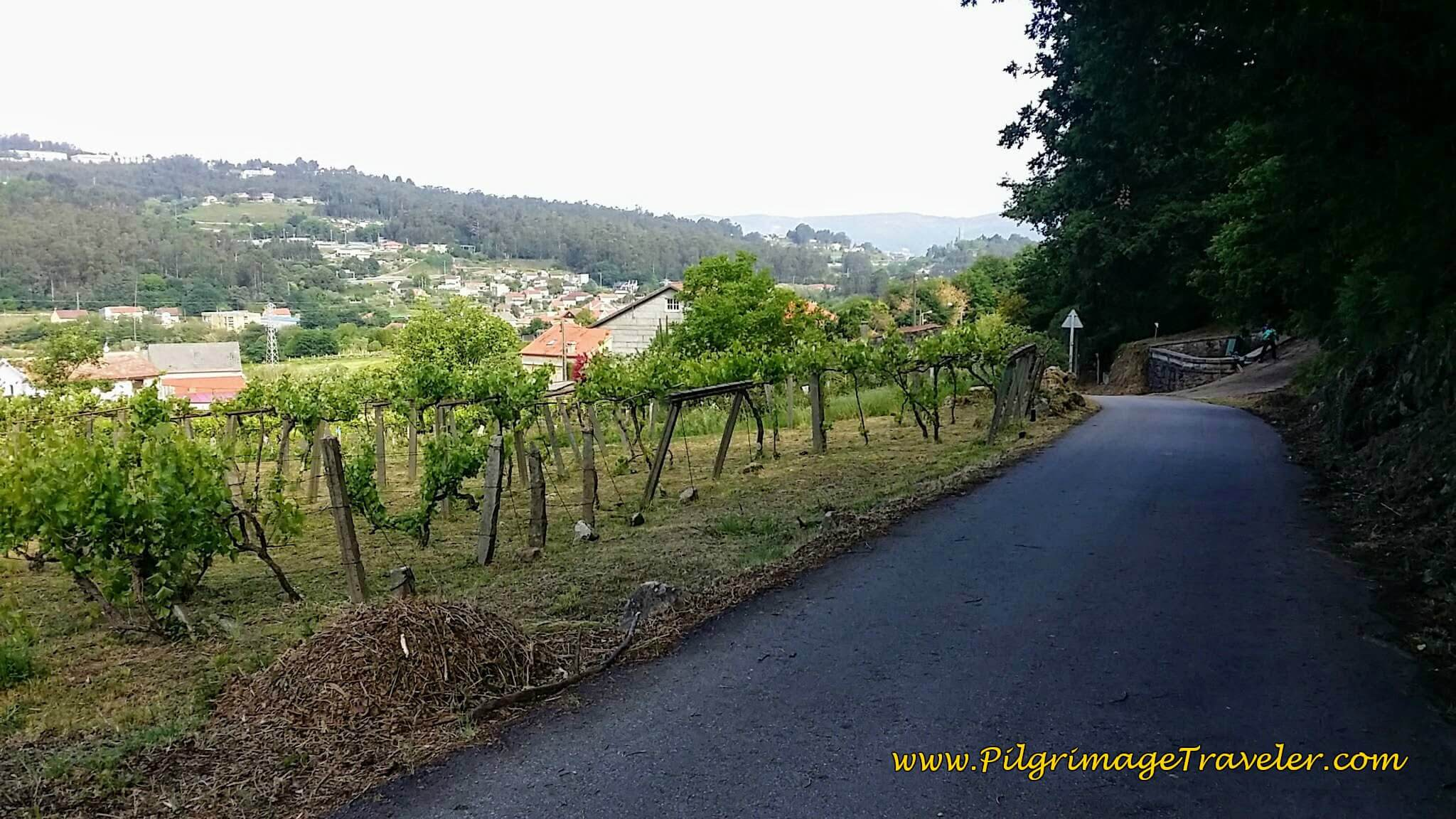 Walking By Canaval, day twenty-two on the Camino Portugués