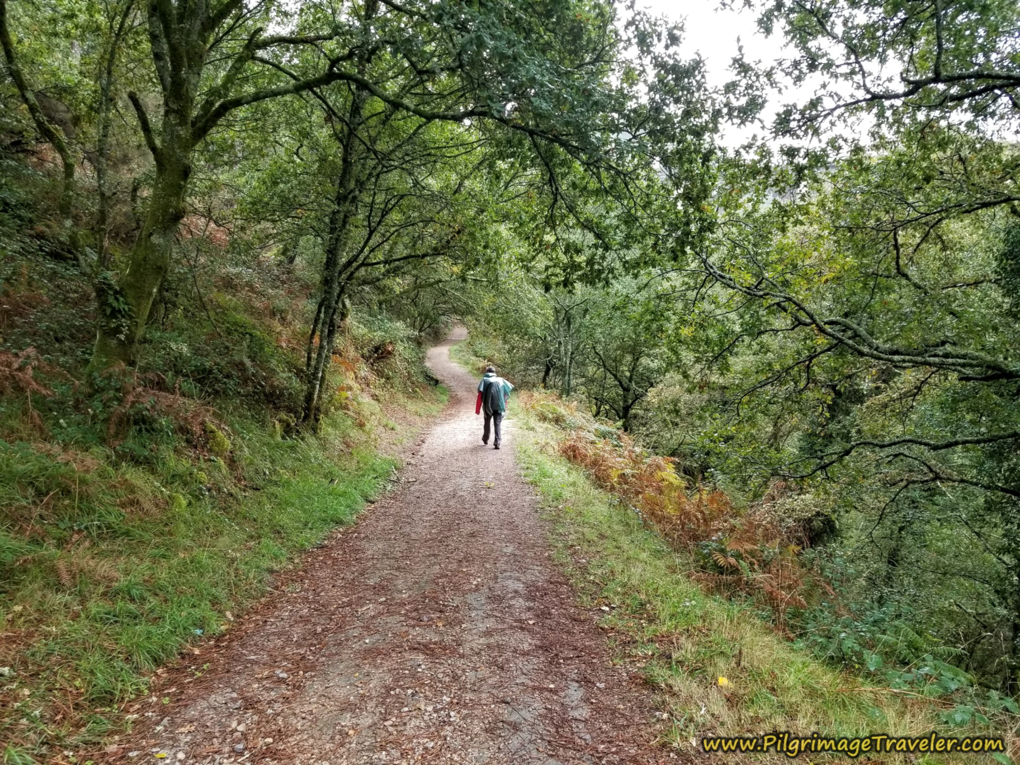 Rich Walking Through More Forest, Camino Sanabrés, Estación de Lalín to Bandeira