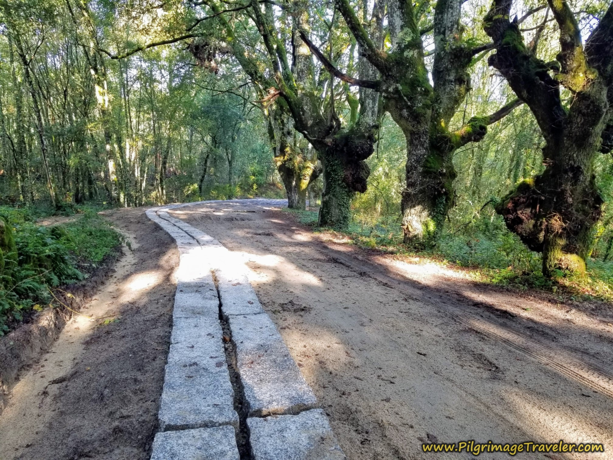 Improved Lane Through Forest