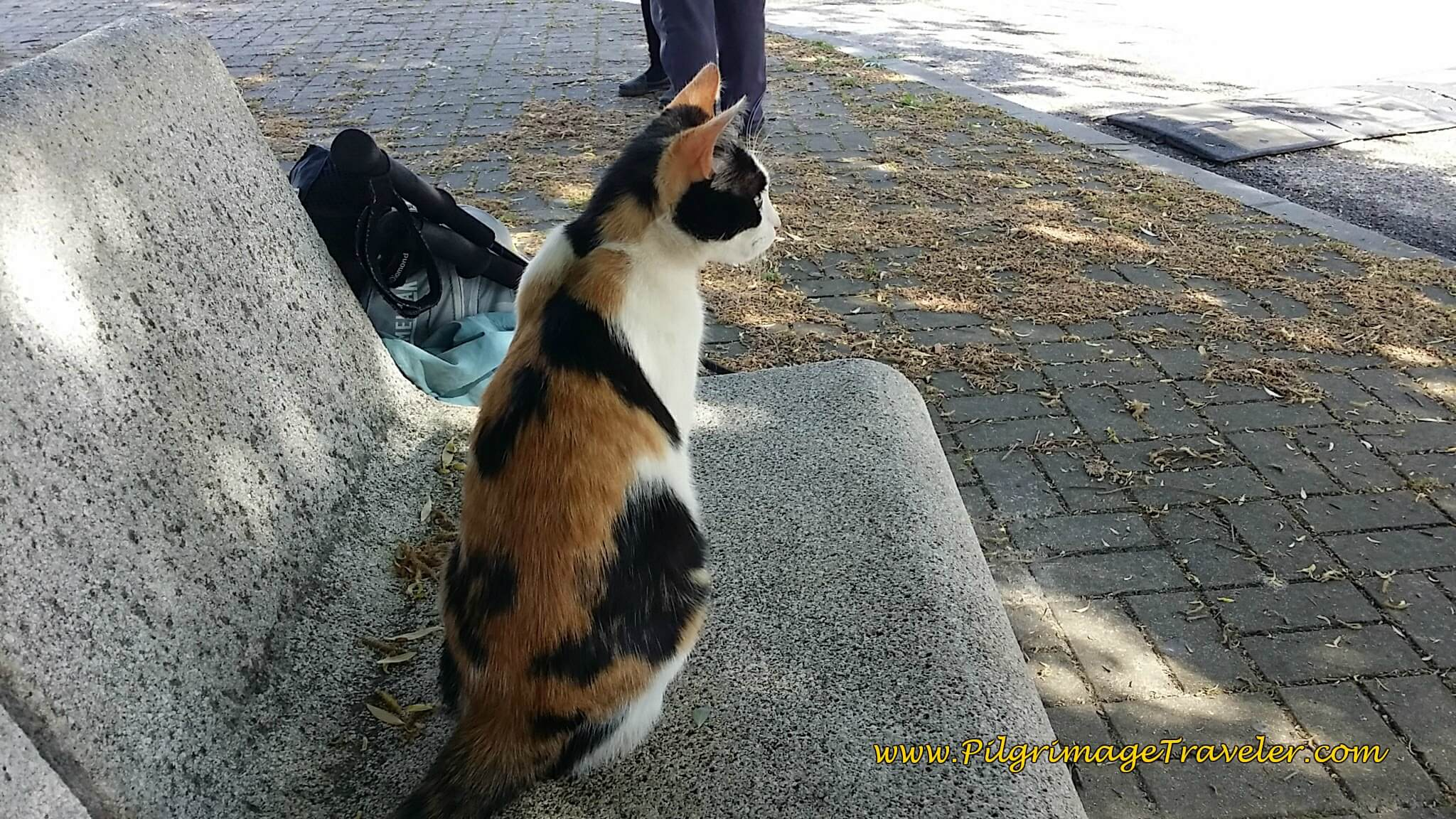 Kitty Comes to the Smell of Canned Tuna on the Camino Portugués
