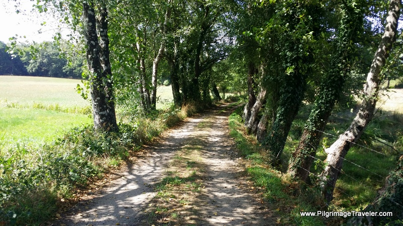 Tree-Lined Tractor Lane