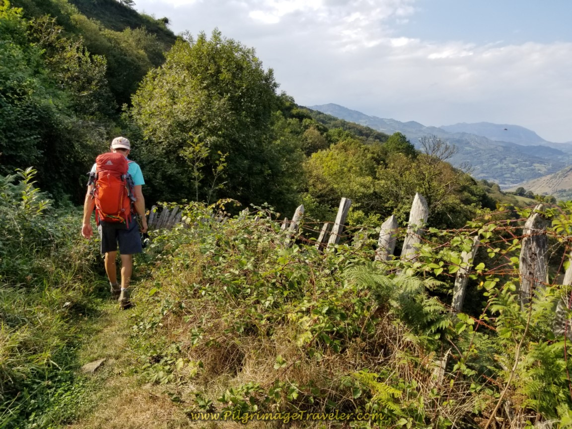 Rich on Overgrown Section of Trail on day four of the Camino de San Salvador