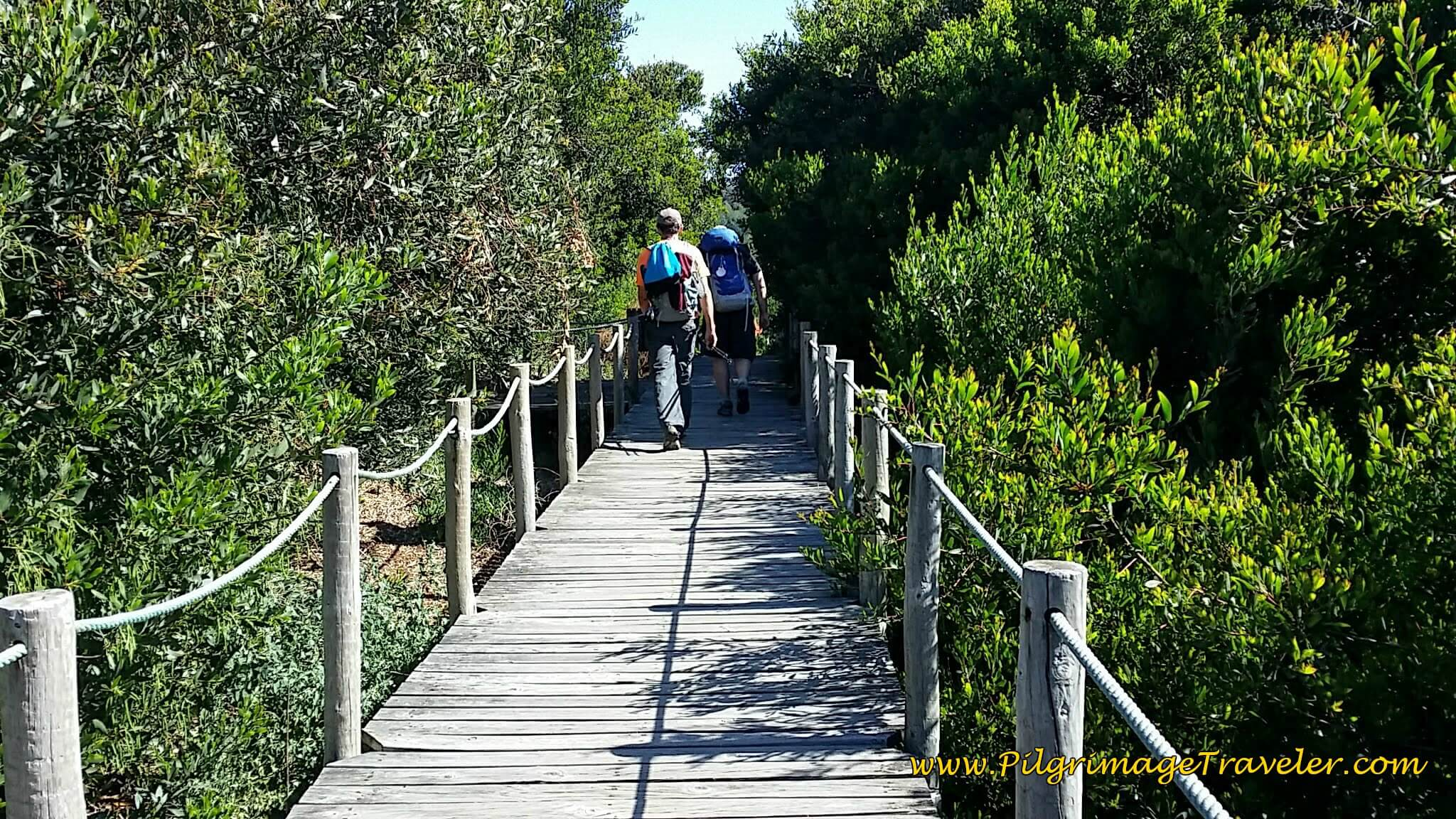 Boardwalk Continues Through Marshes on day eighteen of the Portuguese Way on the Senda Litoral