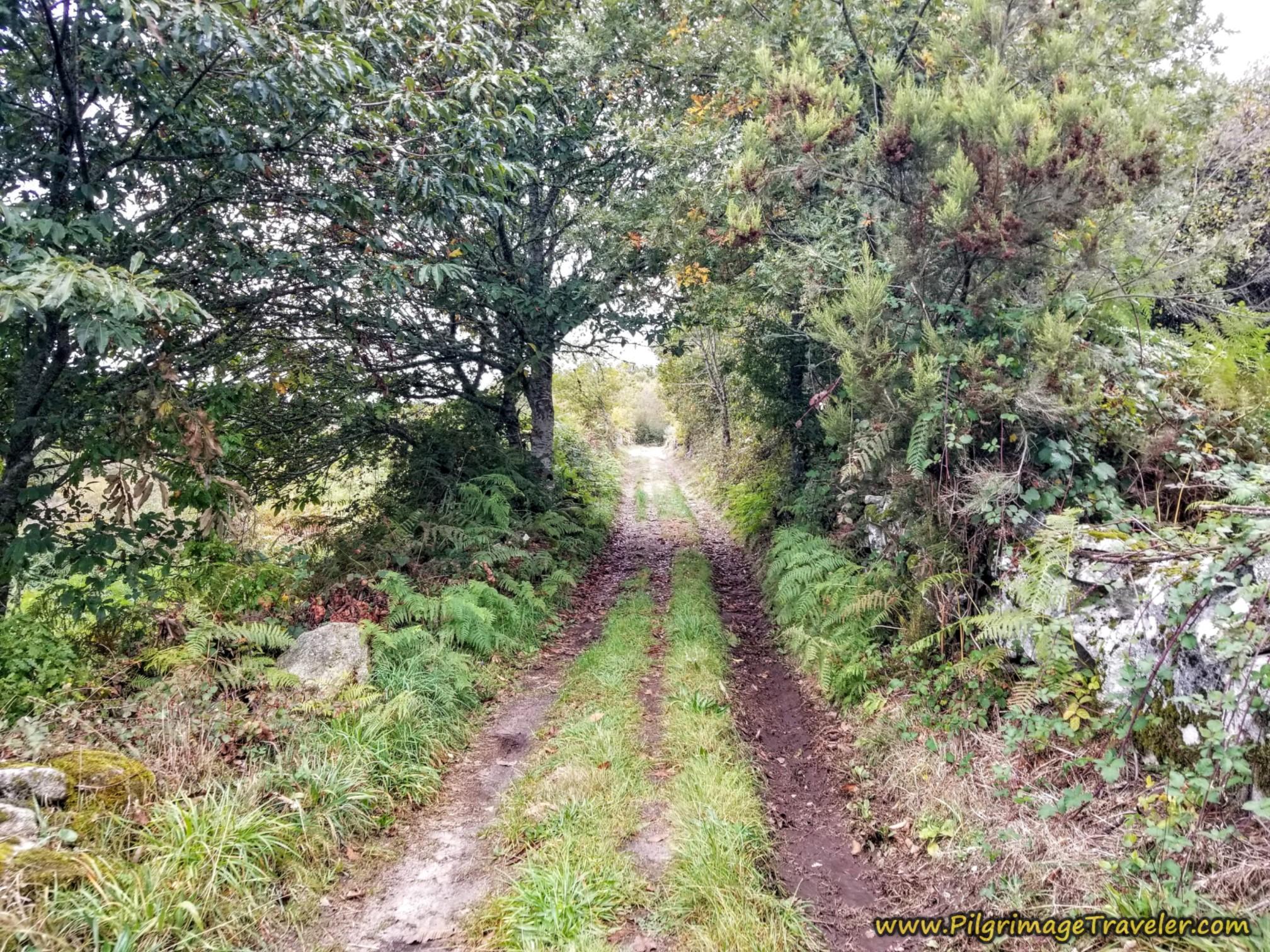 Lane Leaving Alberguería, Camino Sanabrés,  A Laza to Vilar de Barrio