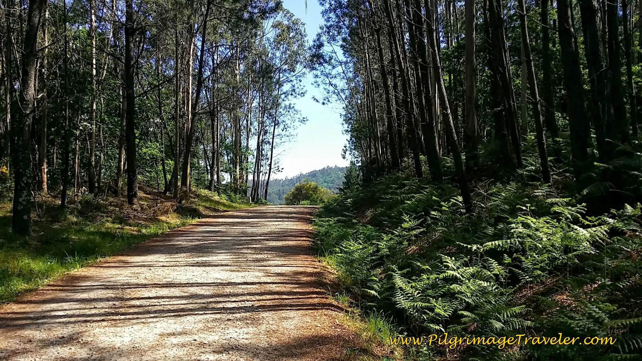 Along the Dirt Aldea Bascuas Toward Picaraña on Day Twenty-Four, Portuguese Camino