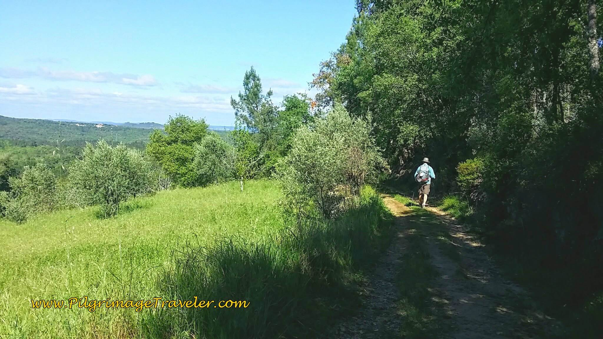 Clearing in the Forest on the Portuguese Camino