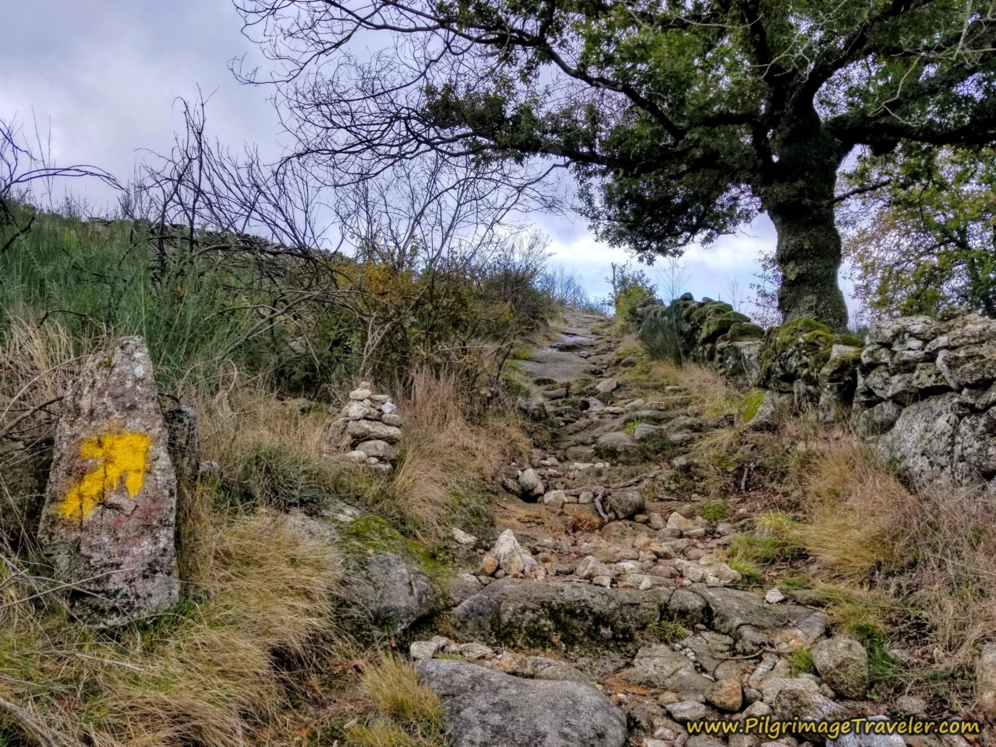 Terrain Opens Up, Camino Sanabrés, Cea to Estación de Lalín