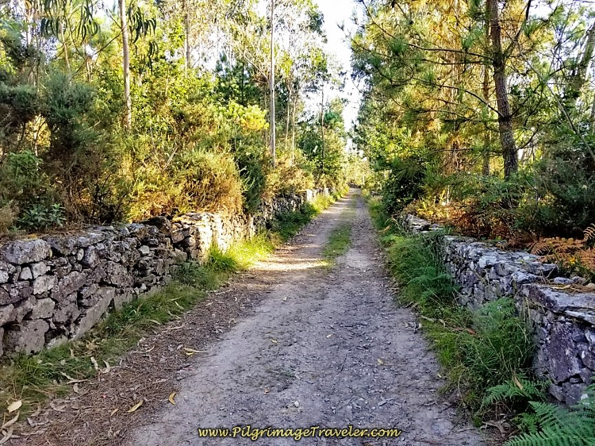 Soon Walls Line the Forest Road