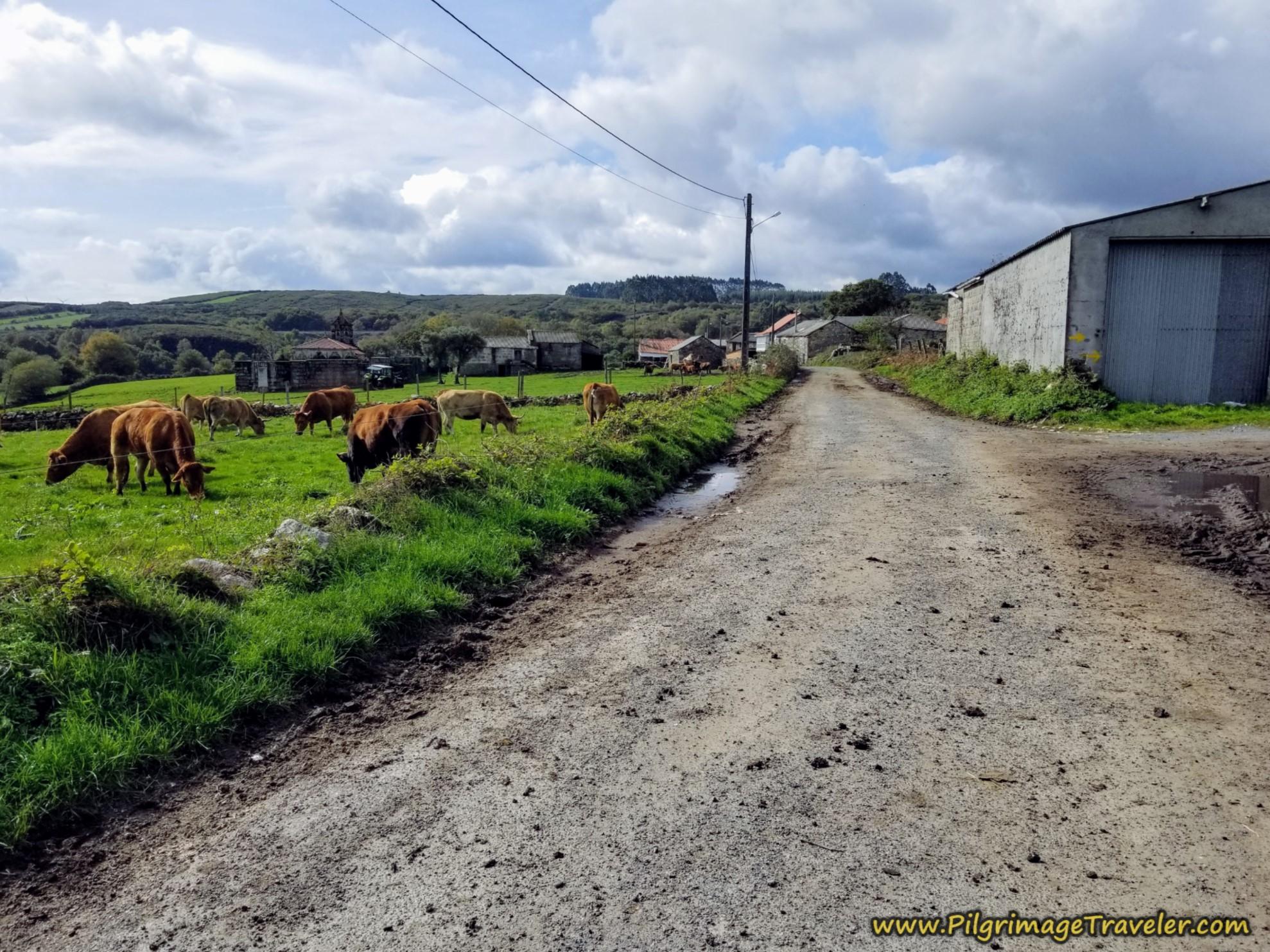 Day Fourteen ~ Cea to Estación de Lalín, 32 Kilometers (19.8 Miles), Part Two