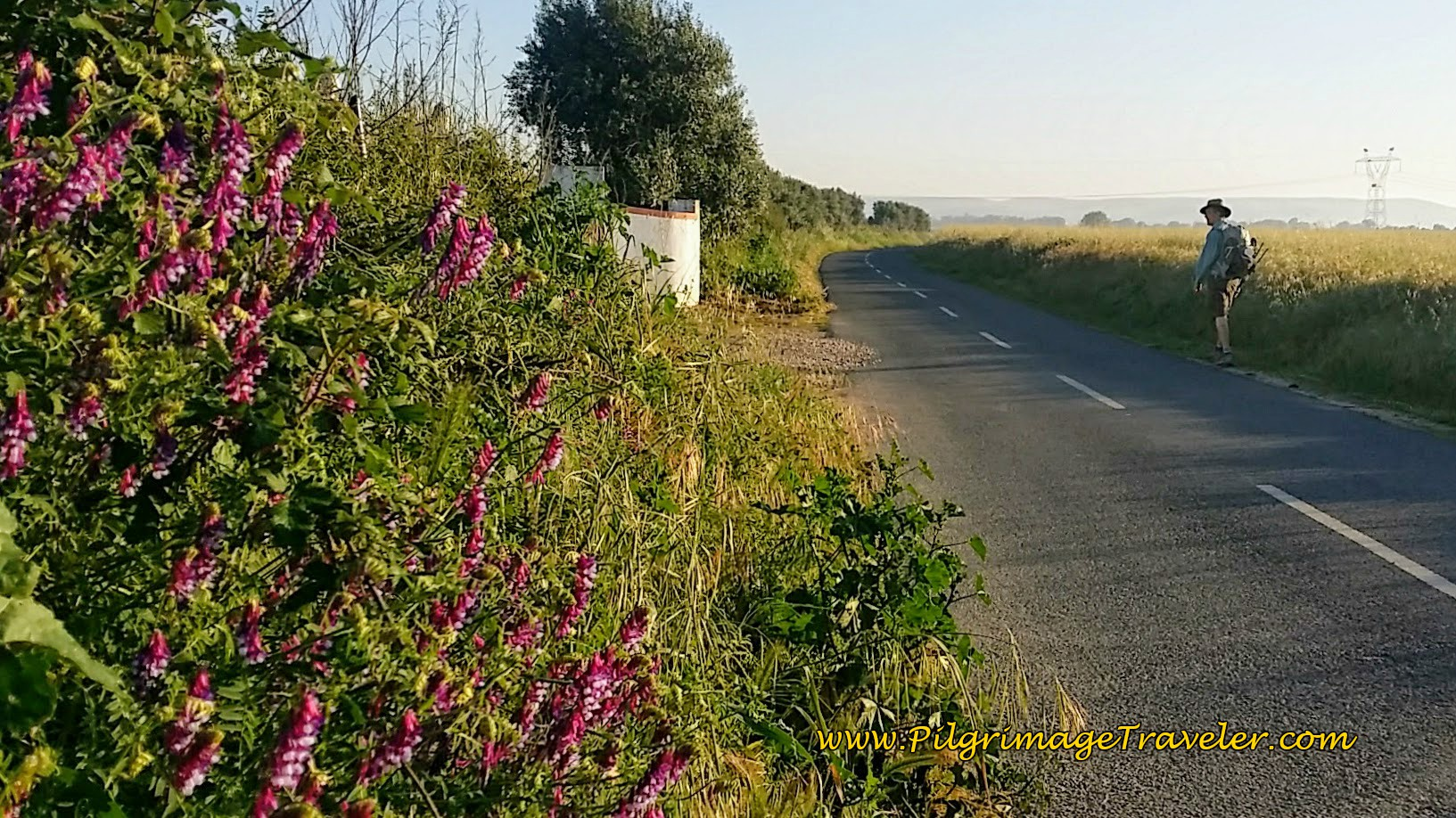 Spring Flowers Grace the Portuguese Way out of Golegã