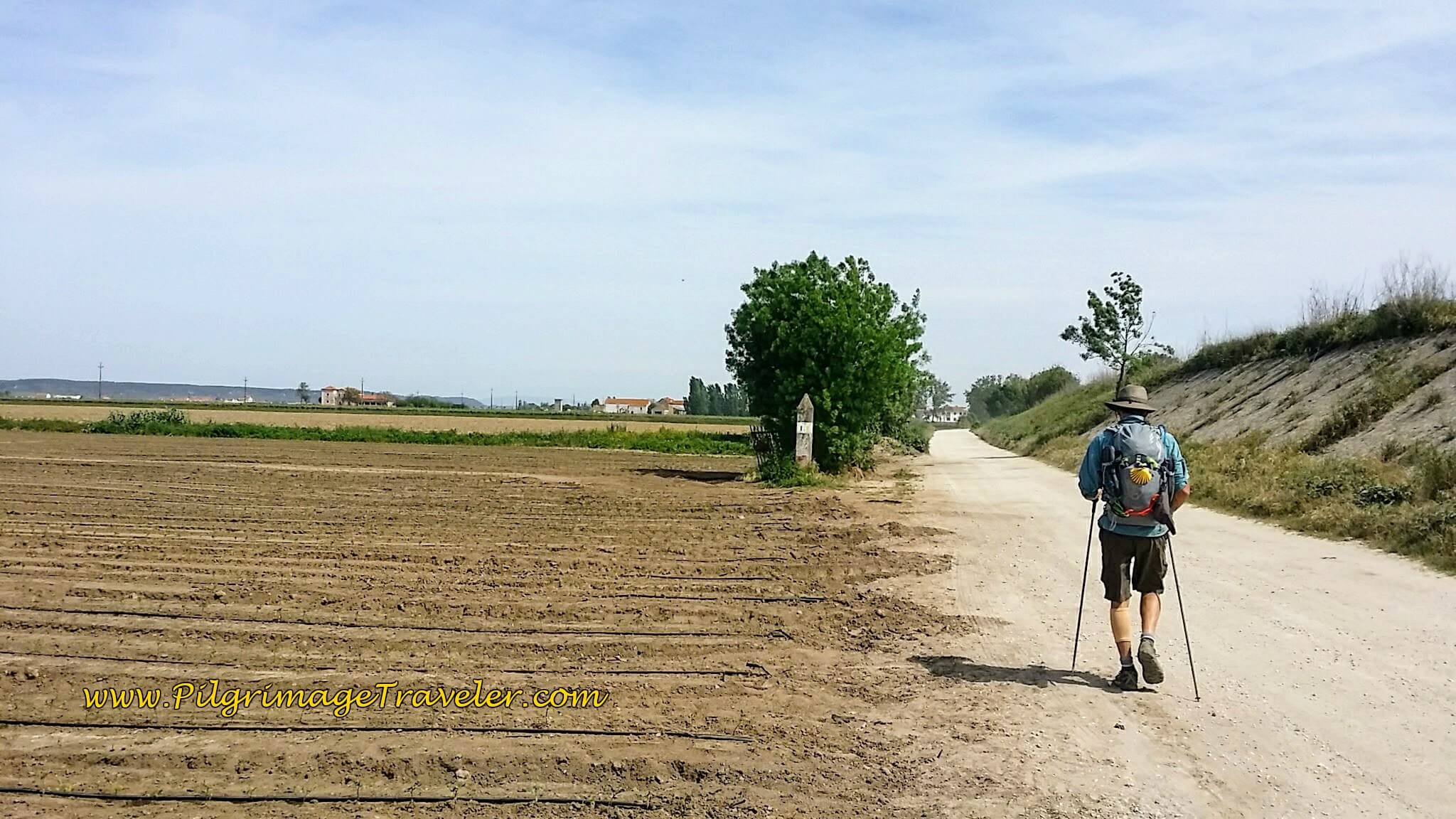Back to the Open Fields, on the Camino Portugués Towards Santarém