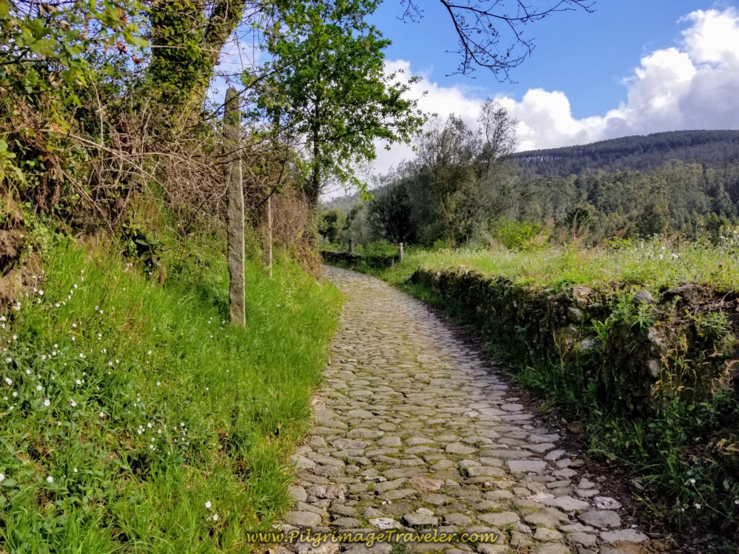 Cobblestone through the Portuguese Countryside on day eighteen on the Central Route of the Portuguese Camino