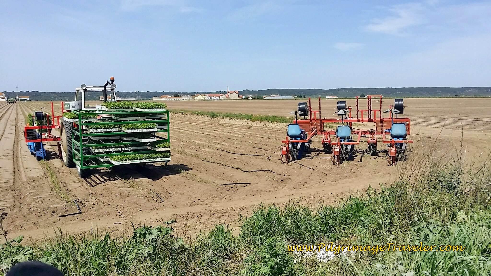 Portuguese Planting Equipment on the Camino near Santarém.