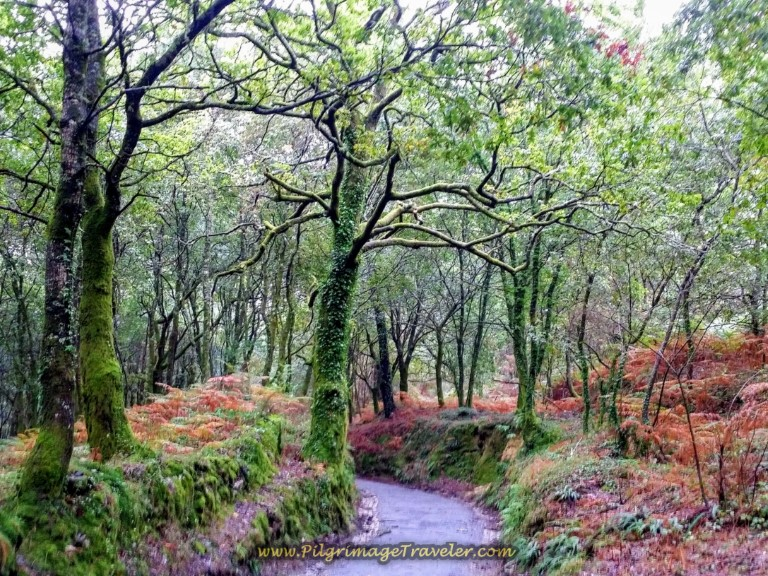Enchanted Forest in the Fall on day one of the Camino Fisterra