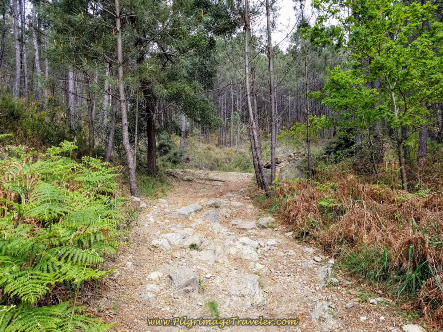 Joining the Via Romana, the ancient Roman road on the climb to the top, the Alto da Portela Grande de Labruja,  on day eighteen on the Central Route of the Portuguese Camino.