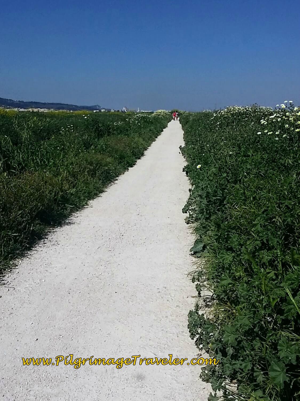 Long, Hot and Dry Path to Alverca do Ribatejo, Portugal