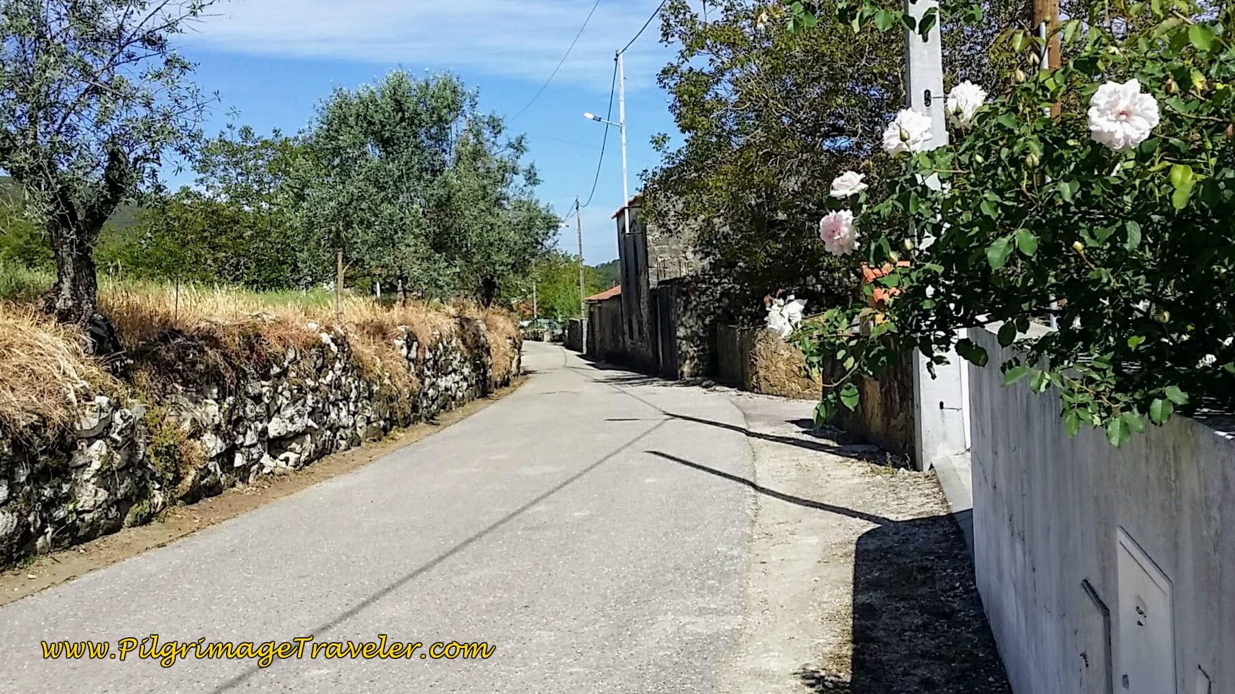 Farther Along the Rua Principal towards Fonte Coberta