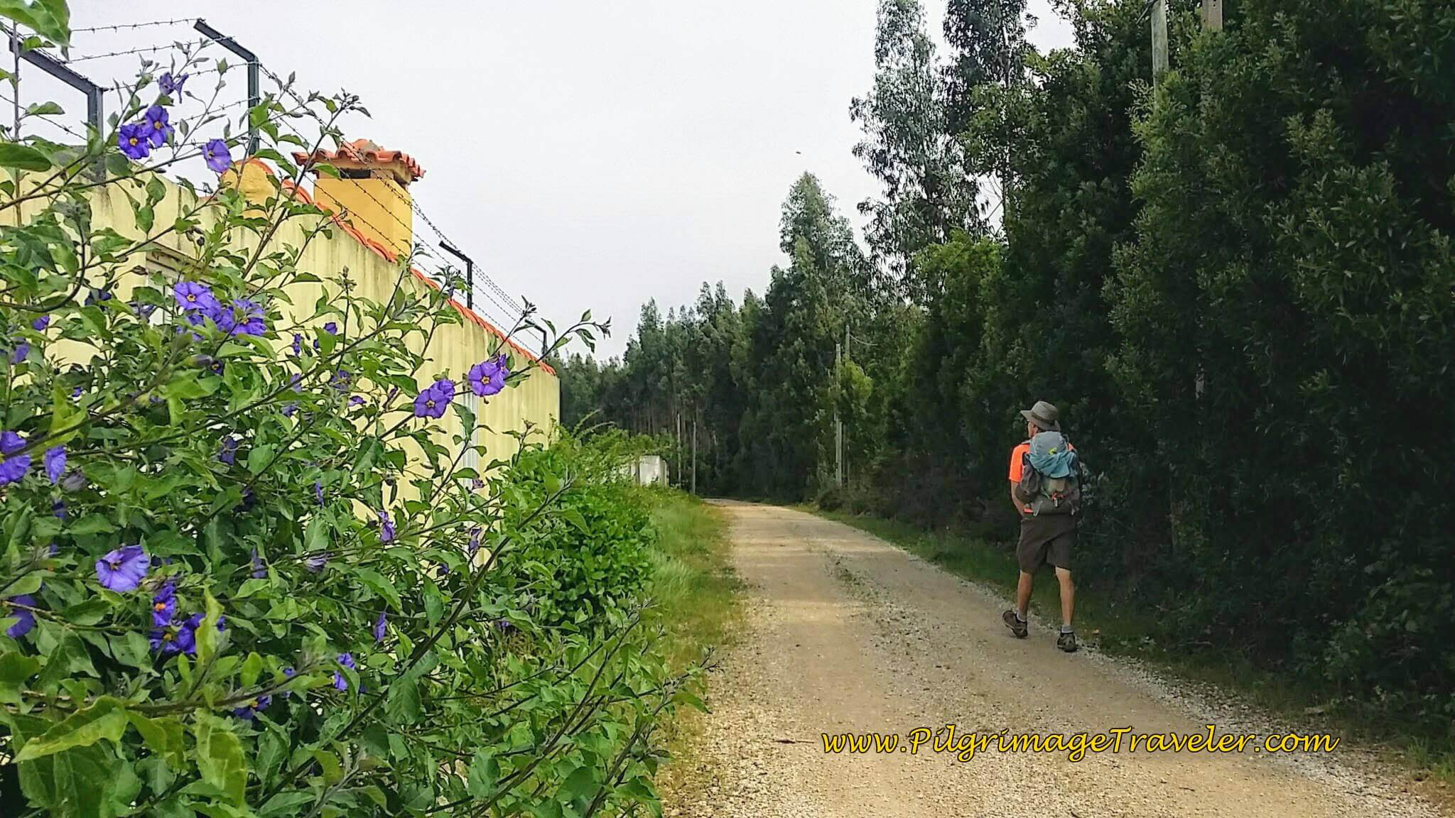 Parallel the Rua Sra. do Socorro and Walk Into Forest on day twelve of the Camino Portugués
