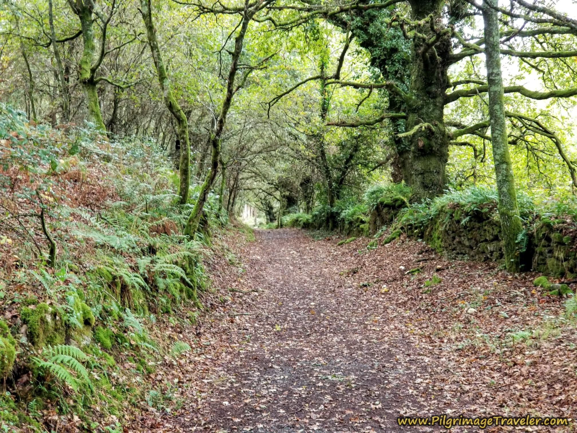 Short Forest Walk to Silleda Industrial Park