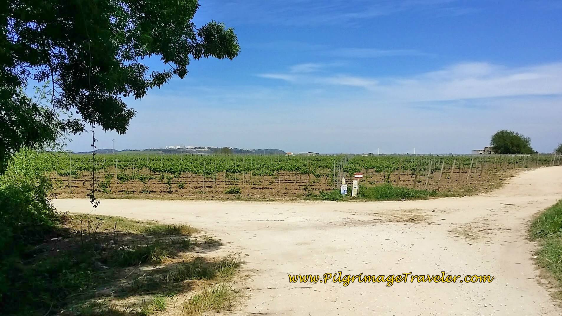 Photo of vineyards and Santarém ahead on the hill, Portugal