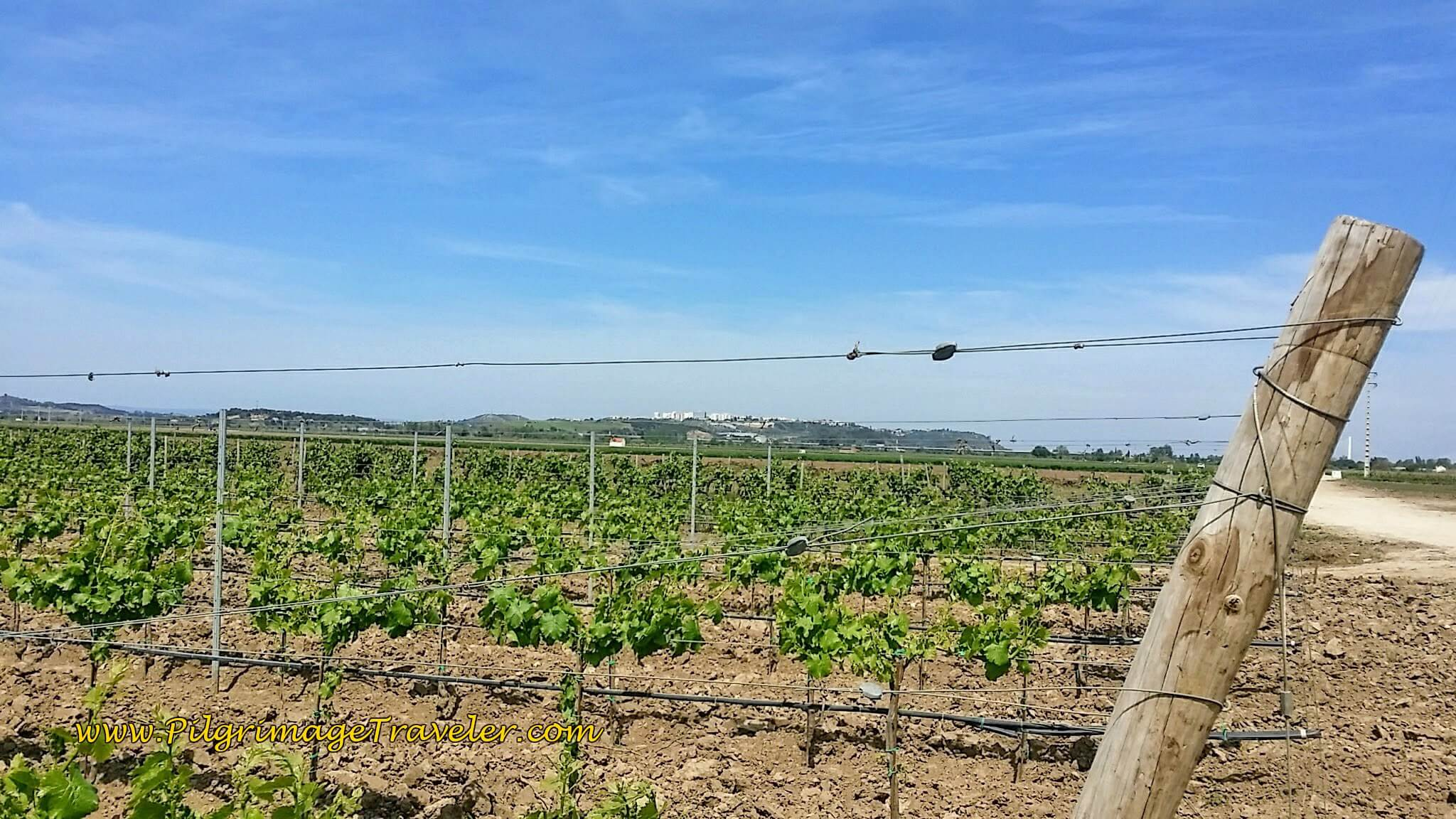 Endless Vineyards, with the Goal of Santarém  Ahead on the Hill