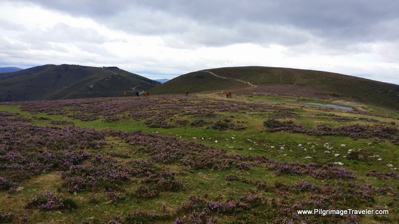 The Open High Plateau on the Hospitales Route