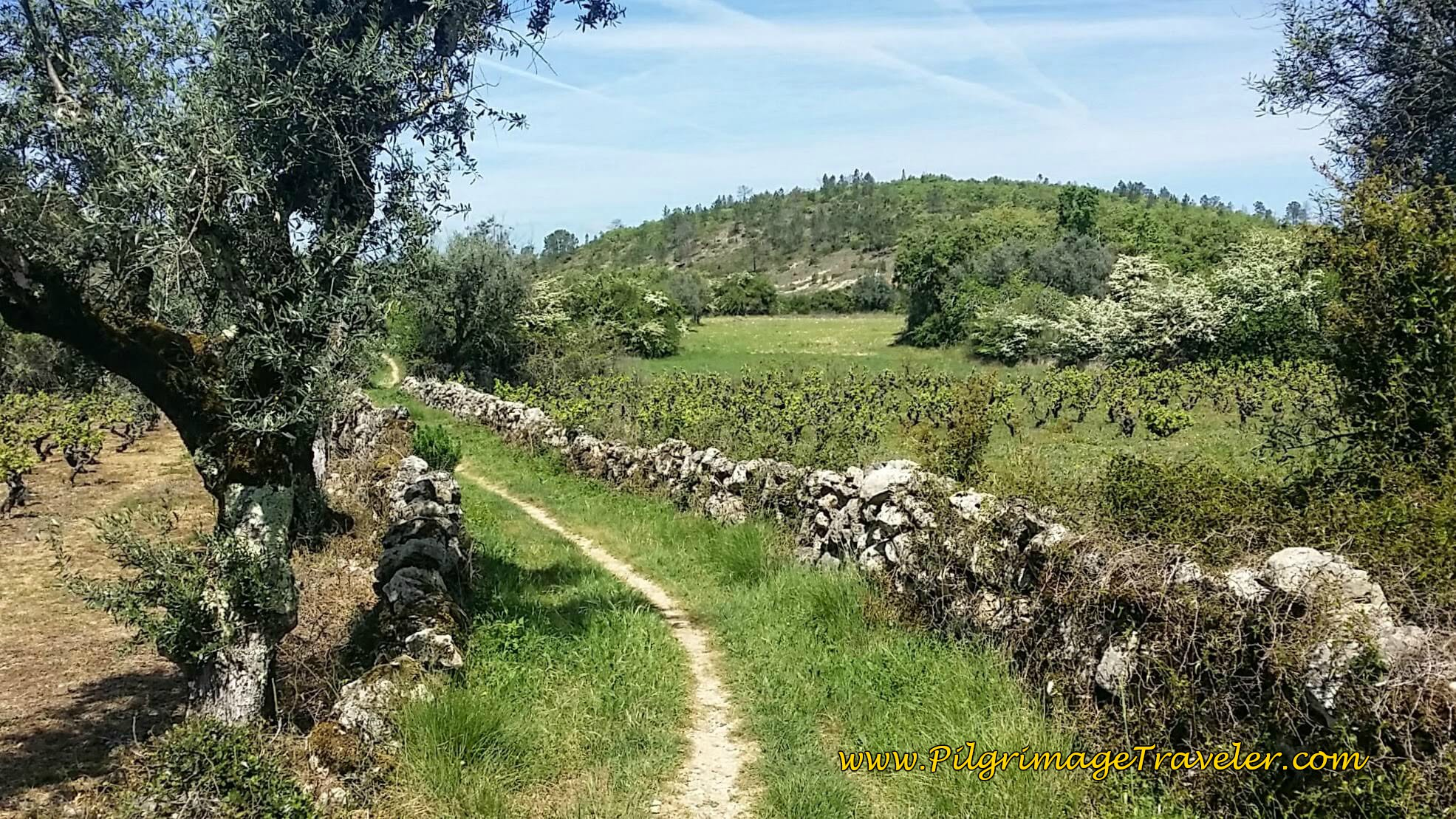 Olive Trees, Vineyards, Stone Walls and Single Track - A Lovely Combination on day seven of the Portuguese Way