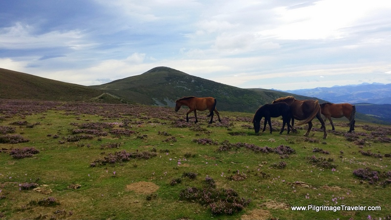 Horses on the High Plateau of the Hospitales Route