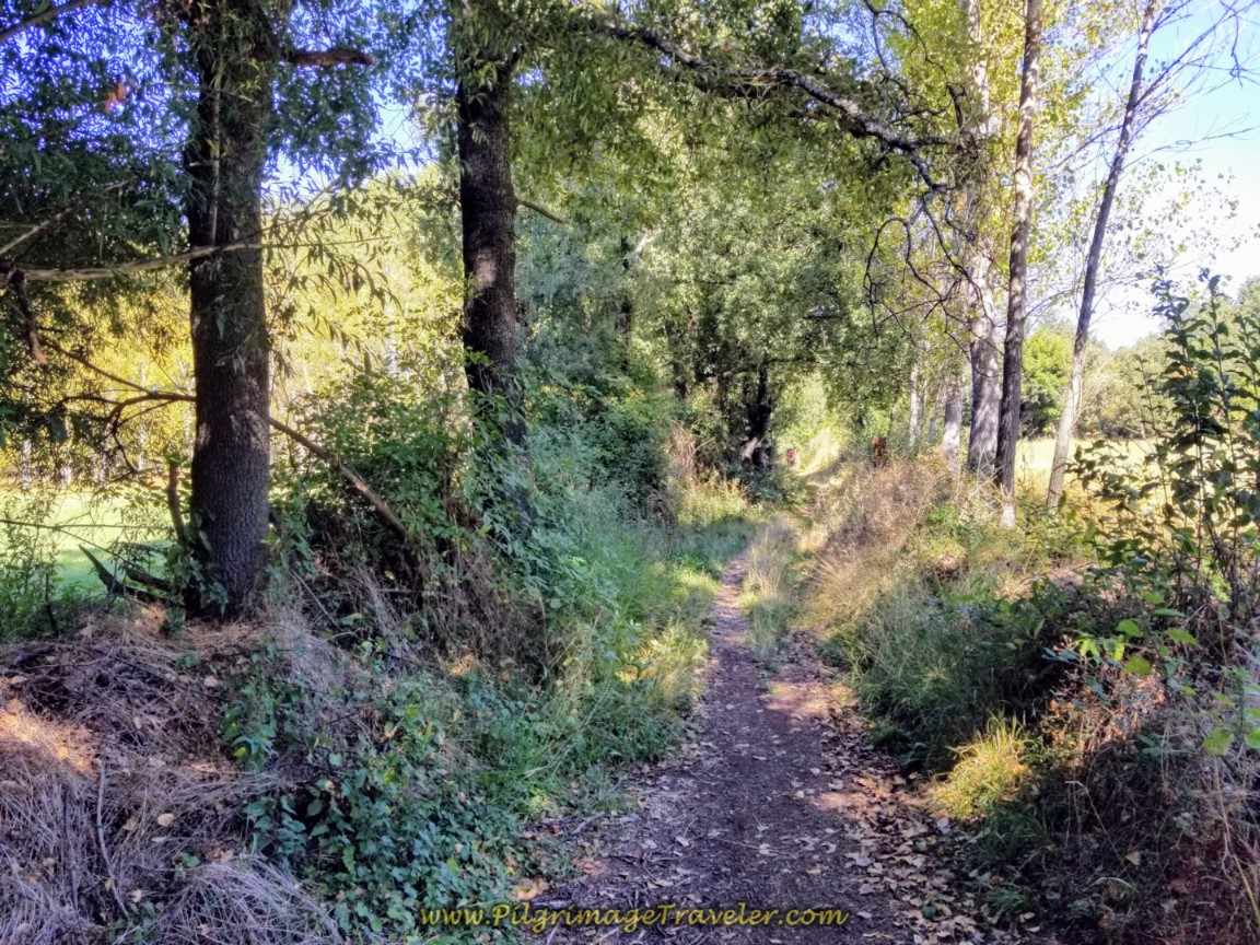 Delicious Wooded Path