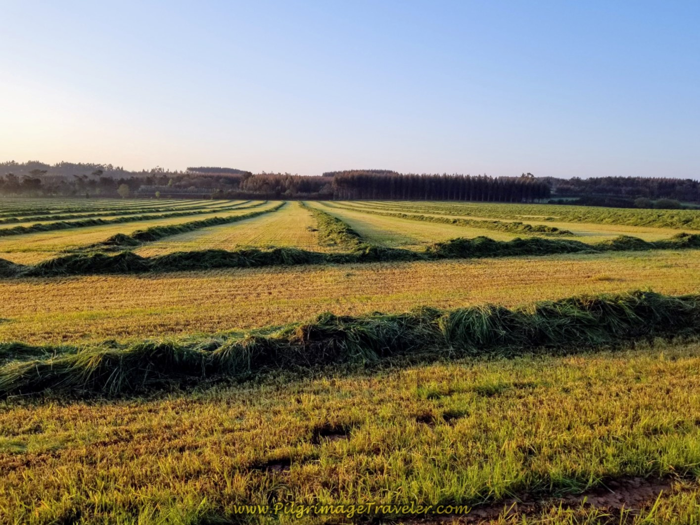 Beautiful Hay Fields in Morning Light on day seven of the Camino Inglés