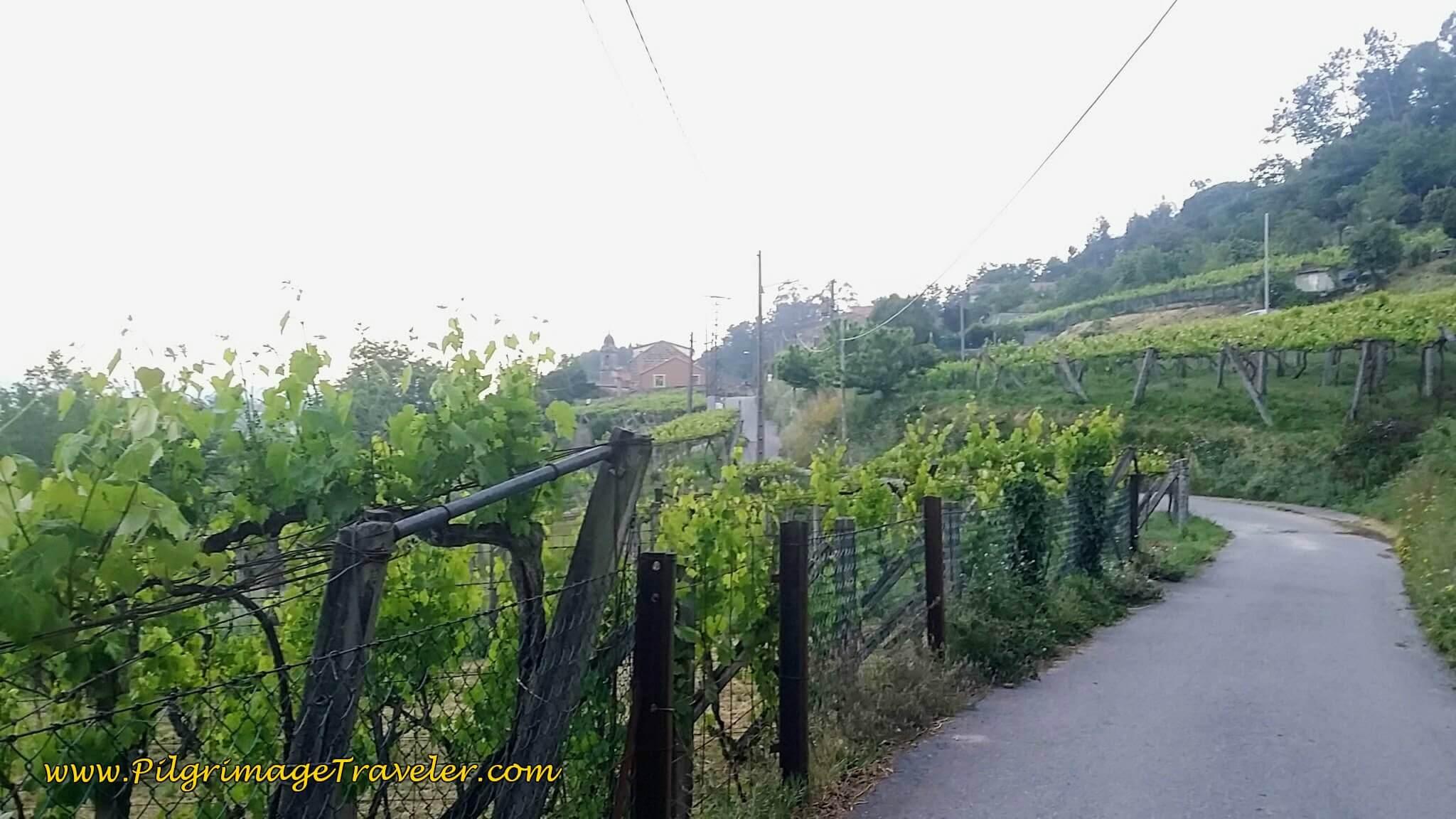 Paved Road Toward San Miguel de Valga on Day Twenty-Four, Camino Portugués
