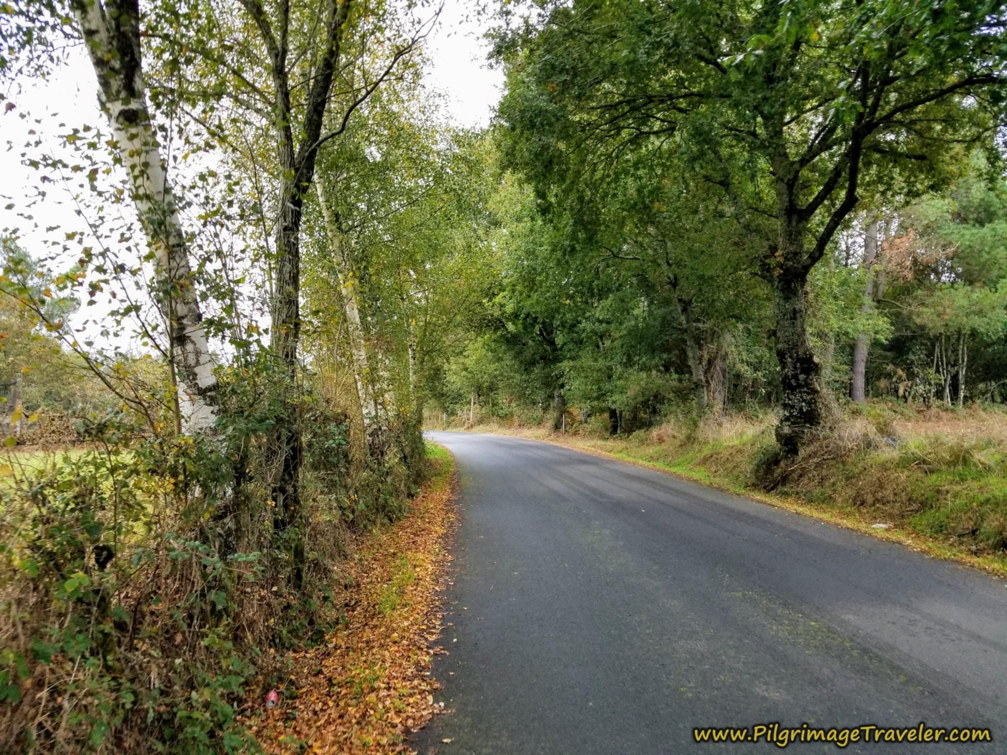 Quiet Secondary Road
