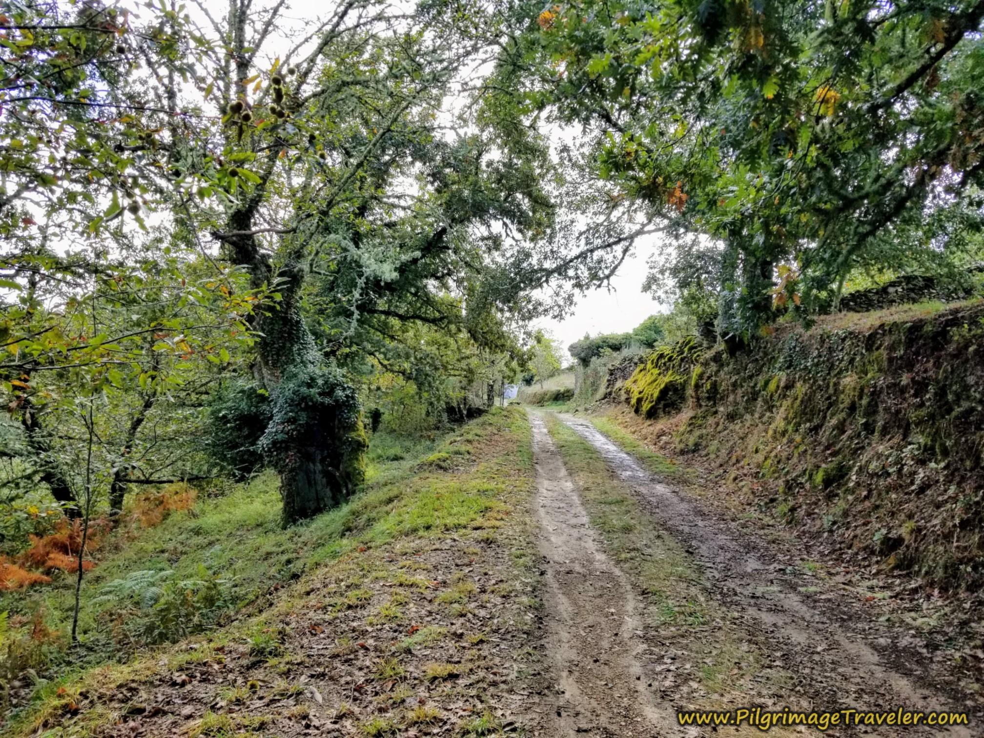 Road Towards As Eiras on the Camino Sanabrés from to A Venda da Capela to A Laza