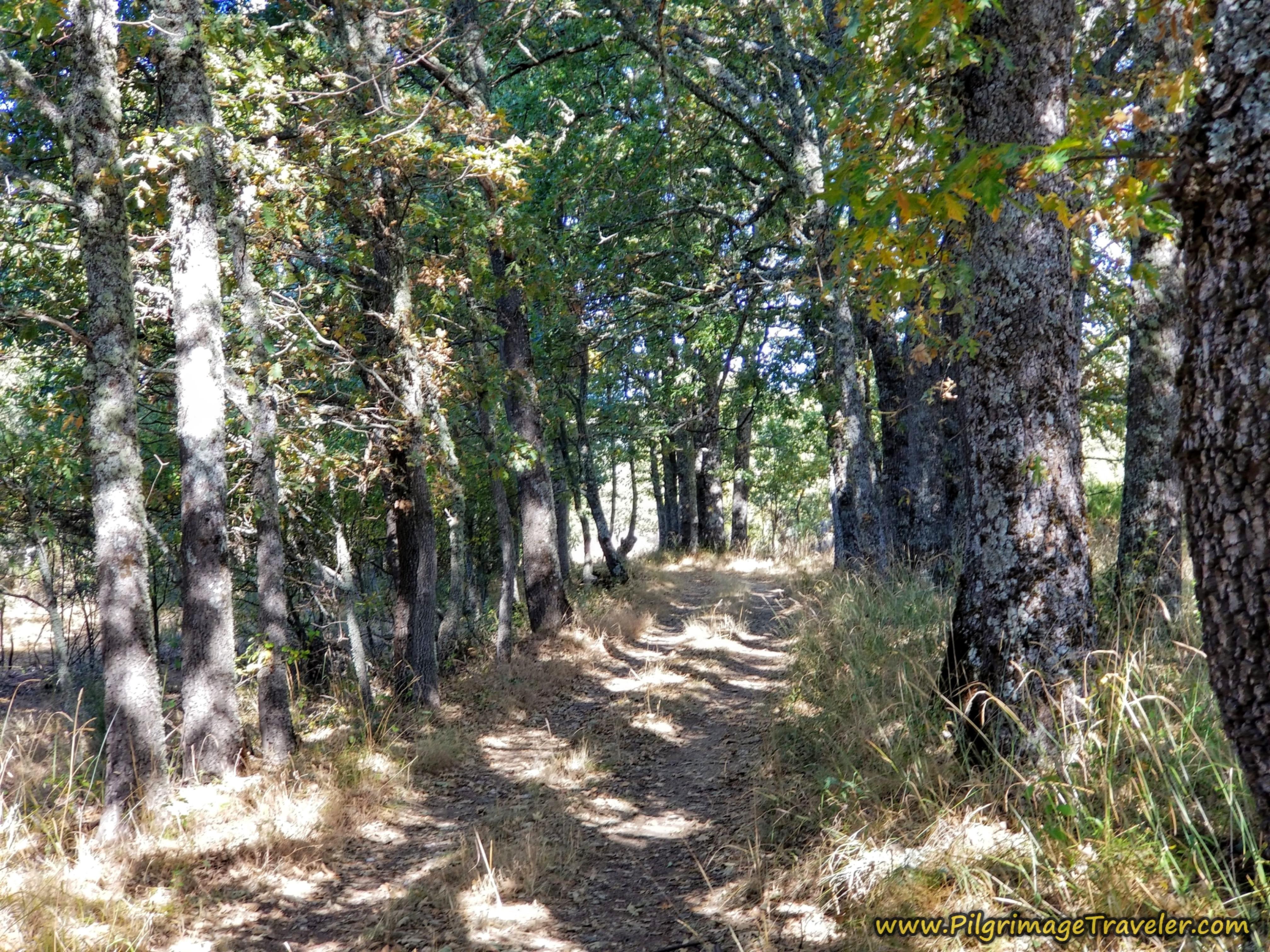 Treed Path, Camino Sanabrés, Rionegro del Puente to Entrepeñas