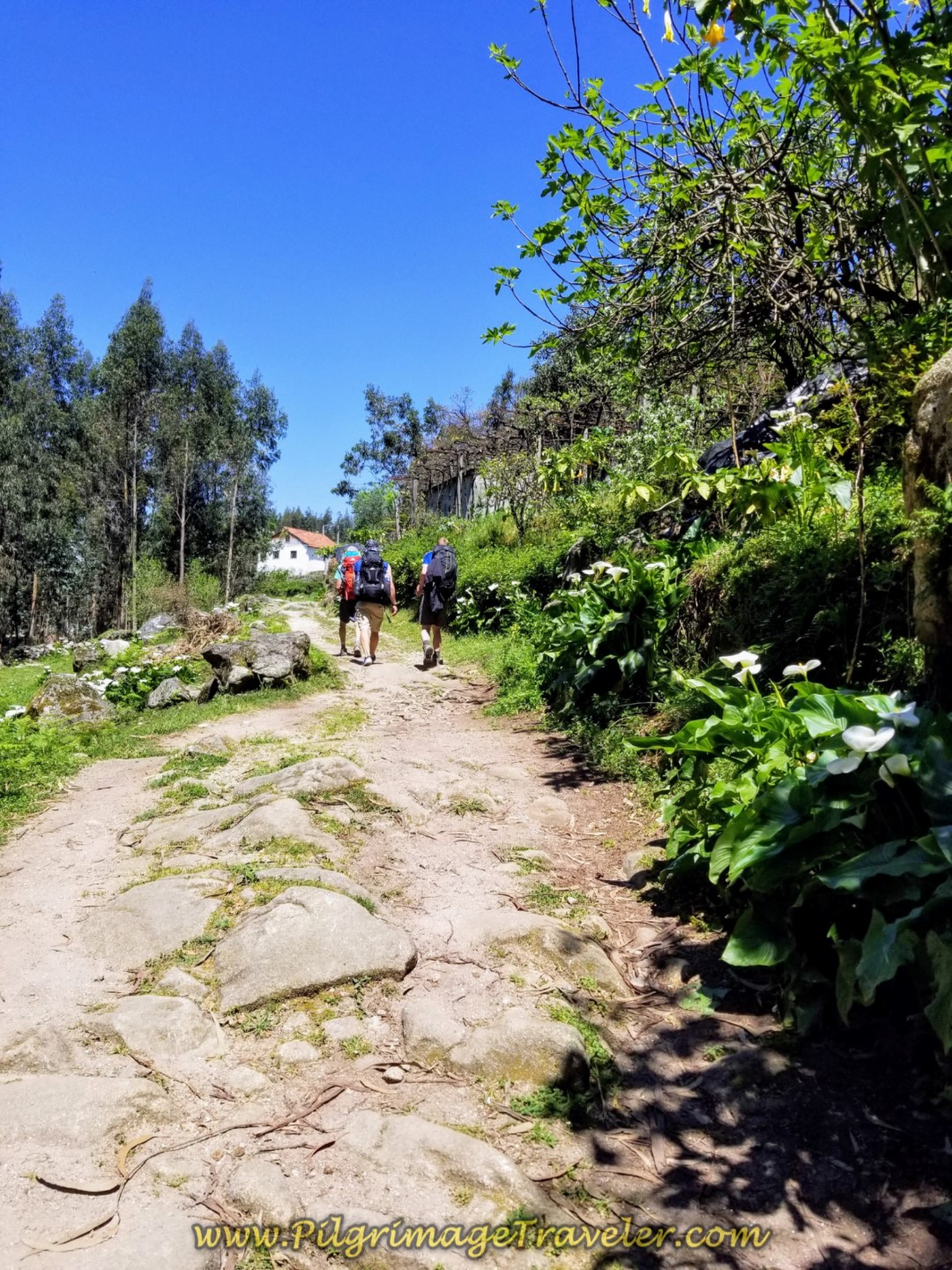Briefly on the Anciet Roman Road in  Vitorino de Piães on day seventeen on the Central Route of the Portuguese Camino