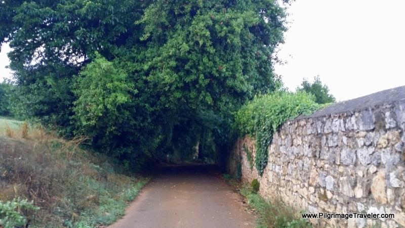Quiet Lane with Stone Wall, Asturias, Spain