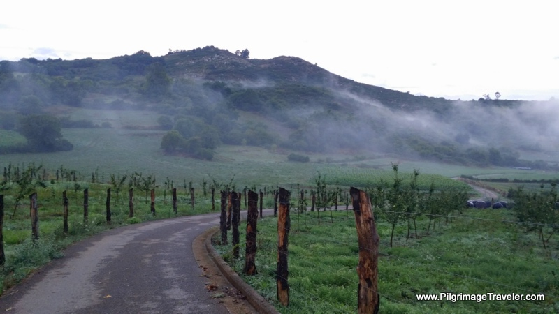 Walk Thru Vineyards in the Mist, Asturias, Spain