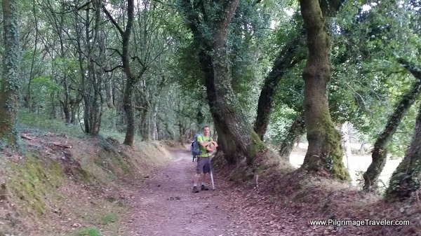 The Moss-Covered and enchanted forest on the 10th stage of the Camino Primitivo near Lugo, Spain