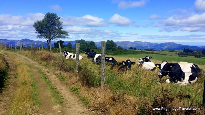 Pastoral Scene on Day Four, Camino Primitivo