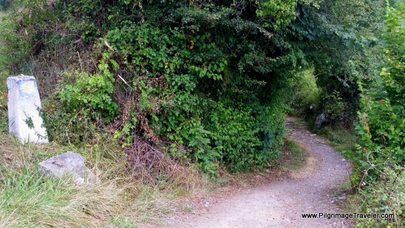 Right Turn Into the Forest, Day One, Camino Primitivo, Asturias, Spain