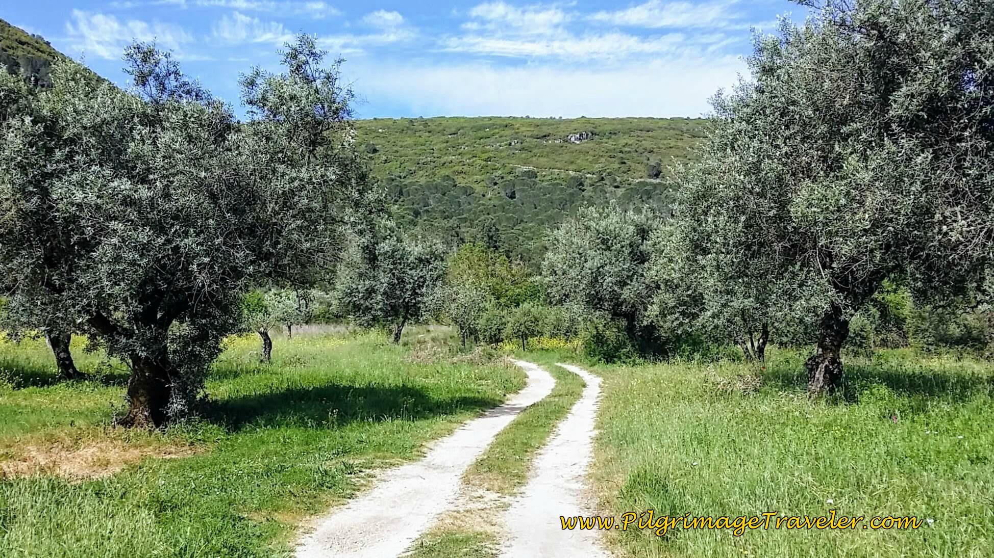 Onward Track thru Olive Groves