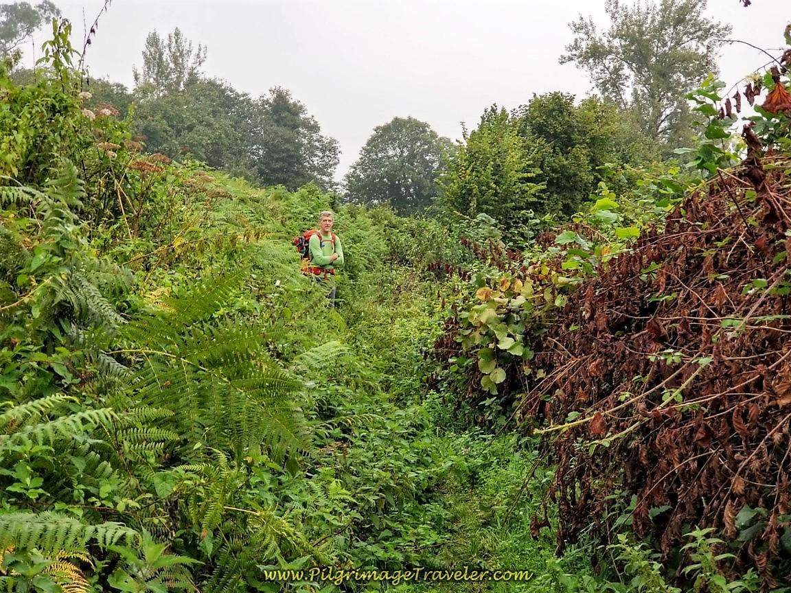 Section of Overgrown Trail along the Camino de San Salvador