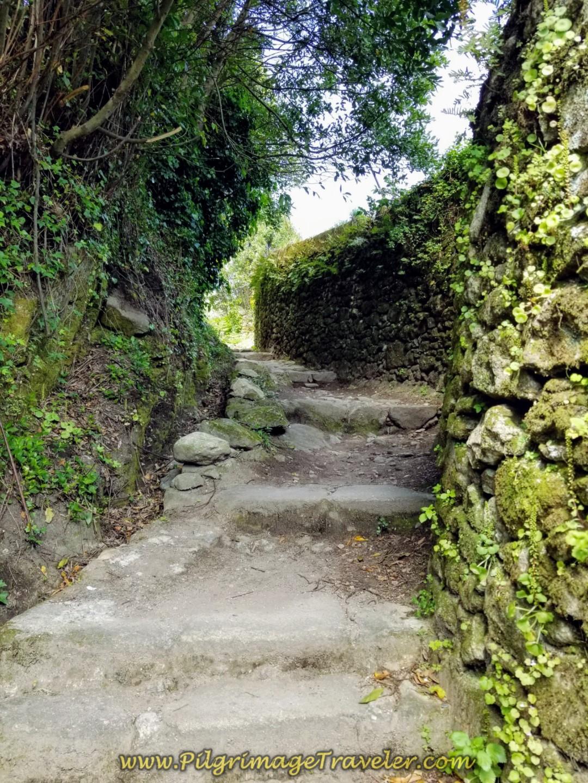 Hidden Garden Passageway